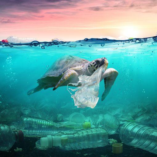 Folge Plastikfrei Leben des Green Life Podcasts mit Verena Fulton-Smith